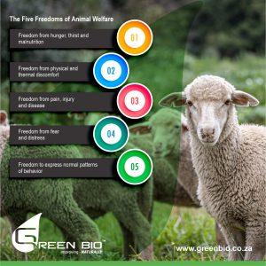 Five Freedoms of Animal Welfare