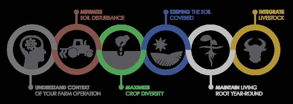 How to regenerate soil