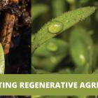 Celebrating Regenerative Agriculture